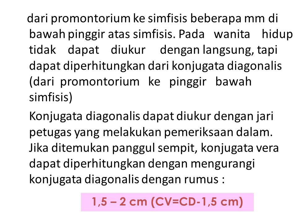 dari promontorium ke simfisis beberapa mm di bawah pinggir atas simfisis. Pada wanita hidup tidak dapat diukur dengan langsung, tapi dapat diperhitung