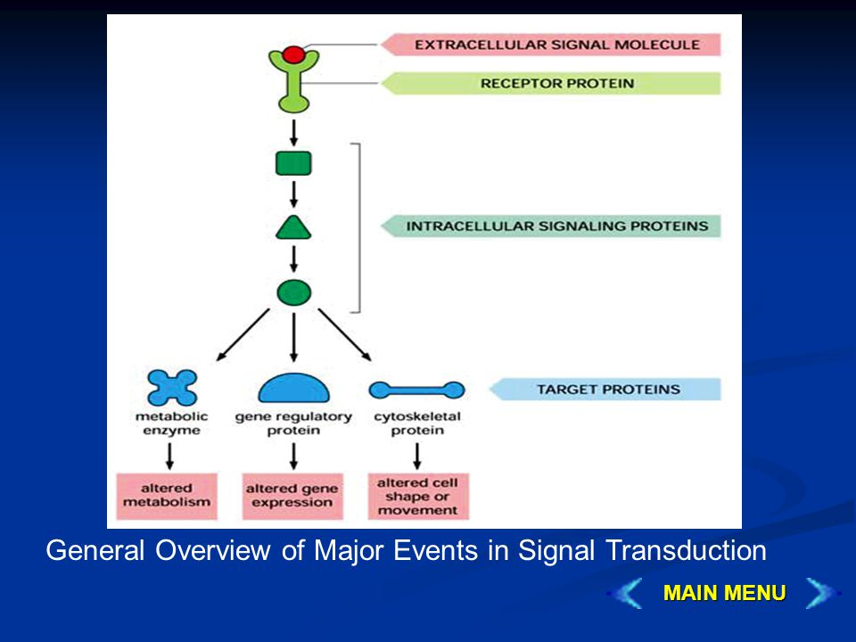 General Overview of Major Events in Signal Transduction MAIN MENU MAIN MENU