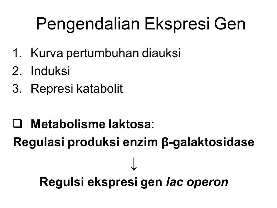Pengendalian Ekspresi Gen 1.Kurva pertumbuhan diauksi 2.Induksi 3.Represi katabolit  Metabolisme laktosa: Regulasi produksi enzim β-galaktosidase ↓ R