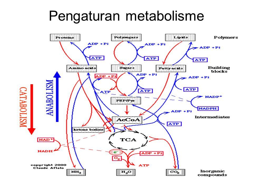 Pengaturan metabolisme