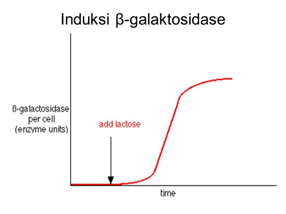 Induksi β-galaktosidase