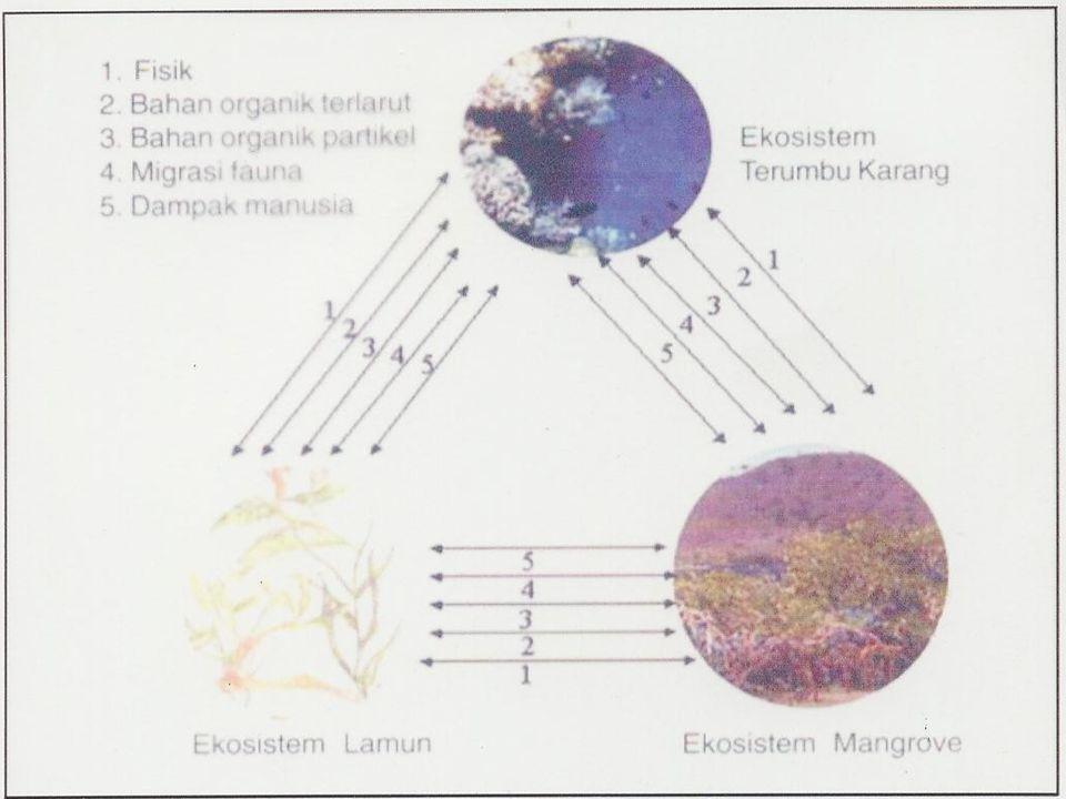 Keterpaduan Ekologis F Antara daratan dan perairan  suatu sistem ekologis F Pesisir merupakan daerah pertemuan darat dan laut  keterkaitan pengelola