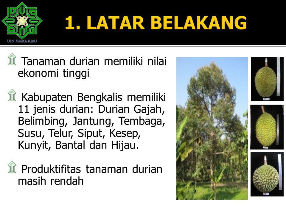 ۩ Tanaman durian memiliki nilai ekonomi tinggi ۩ Kabupaten Bengkalis memiliki 11 jenis durian: Durian Gajah, Belimbing, Jantung, Tembaga, Susu, Telur,