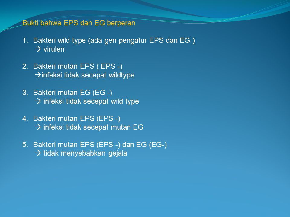 Bukti bahwa EPS dan EG berperan 1.Bakteri wild type (ada gen pengatur EPS dan EG )  virulen 2.Bakteri mutan EPS ( EPS -)  infeksi tidak secepat wild