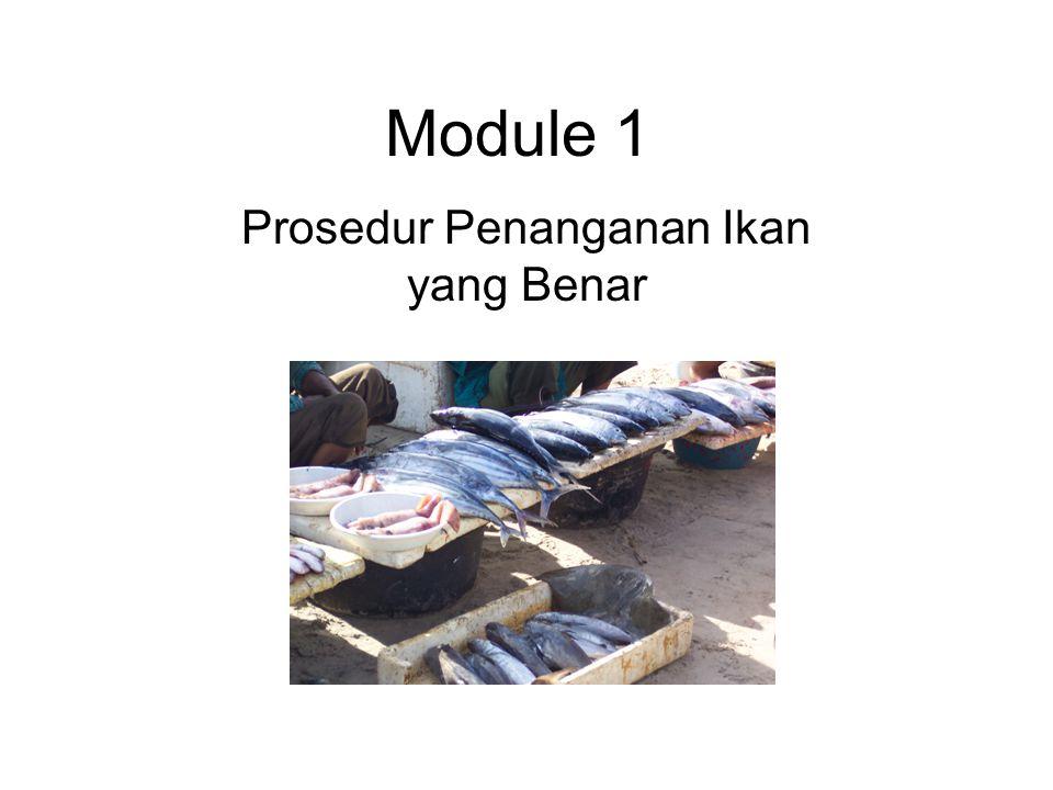 Module 1 Prosedur Penanganan Ikan yang Benar