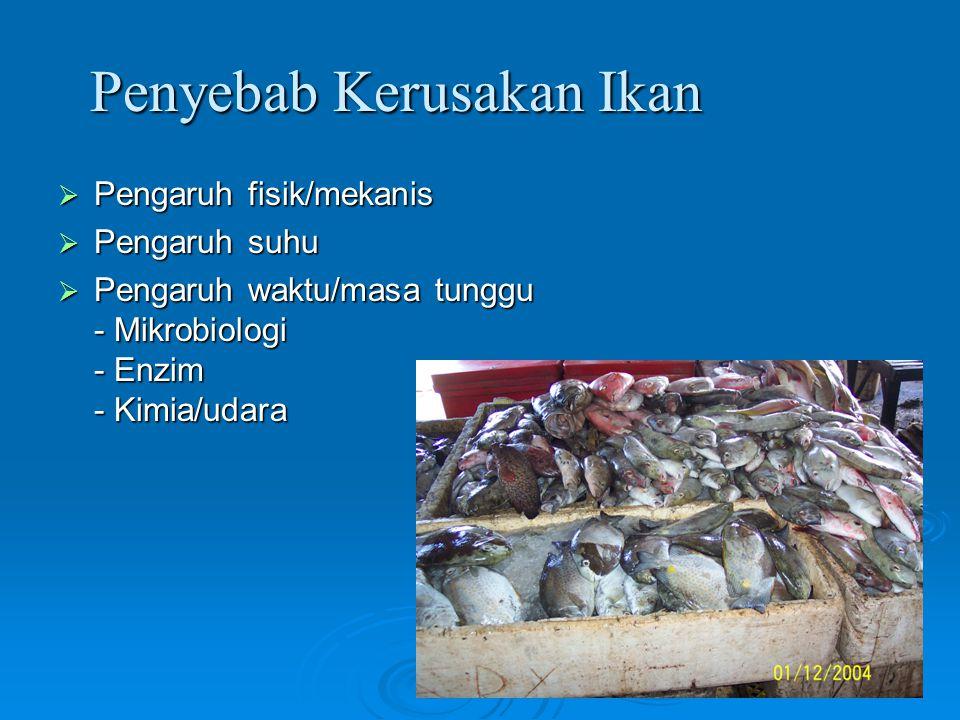 Penyebab Kerusakan Ikan  Pengaruh fisik/mekanis  Pengaruh suhu  Pengaruh waktu/masa tunggu - Mikrobiologi - Enzim - Kimia/udara
