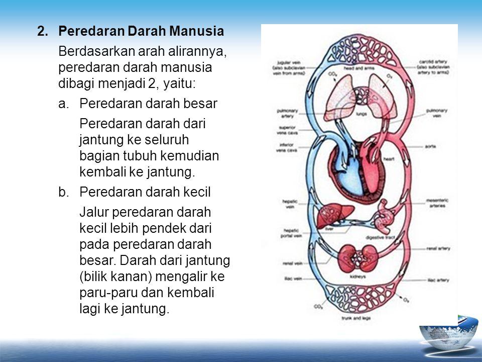 2.Peredaran Darah Manusia Berdasarkan arah alirannya, peredaran darah manusia dibagi menjadi 2, yaitu: a.Peredaran darah besar Peredaran darah dari ja