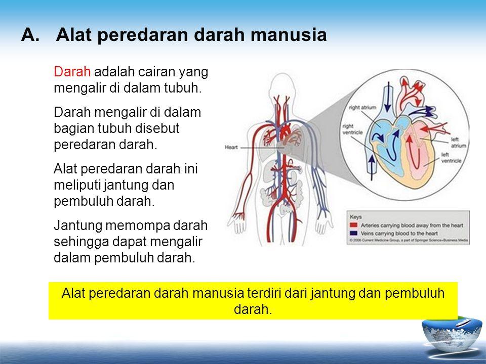 A. Alat peredaran darah manusia Alat peredaran darah manusia terdiri dari jantung dan pembuluh darah. Darah adalah cairan yang mengalir di dalam tubuh