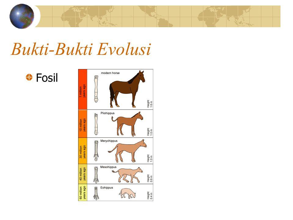 Bukti-Bukti Evolusi Fosil