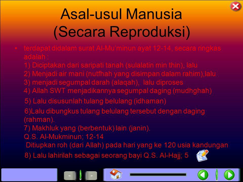 Asal-usul Manusia (Secara Reproduksi) terdapat didalam surat Al-Mu'minun ayat 12-14, secara ringkas adalah : 1) Diciptakan dari saripati tanah (sulalatin min thin), lalu 2) Menjadi air mani (nutfhah yang disimpan dalam rahim),lalu 3) menjadi segumpal darah (alaqah), lalu diproses 4) Allah SWT menjadikannya segumpal daging (mudhghah) 5) Lalu disusunlah tulang belulang (idhaman) 6)Lalu dibungkus tulang belulang tersebut dengan daging (rahman).