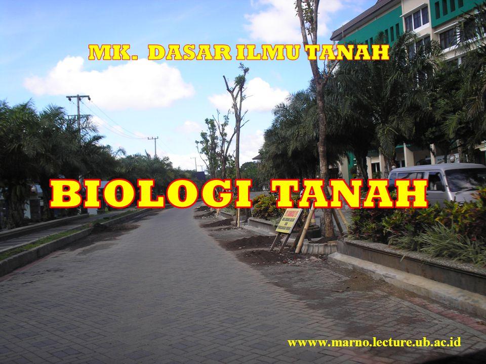 Diunduh dari: http://www.plantaglobe.com/html/body_types_of_mycorrhizal_symbiosis.HTM ………….