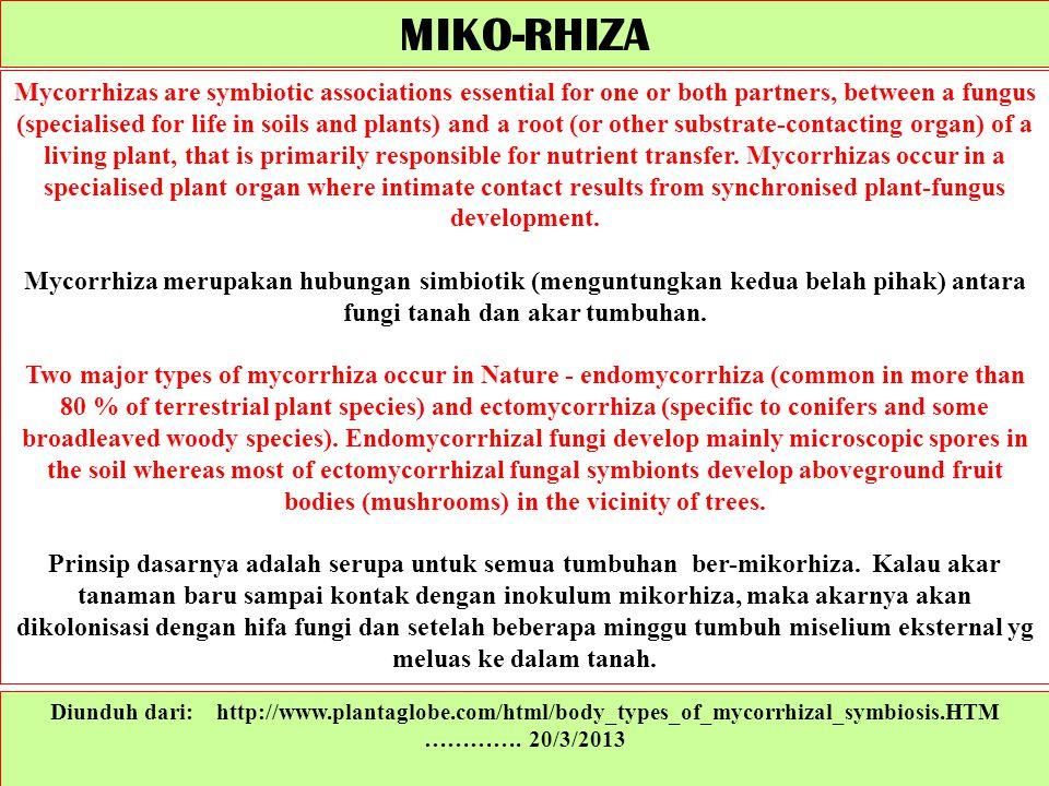 Diunduh dari: http://www.plantaglobe.com/html/body_types_of_mycorrhizal_symbiosis.HTM …………. 20/3/2013 Mycorrhizas are symbiotic associations essential