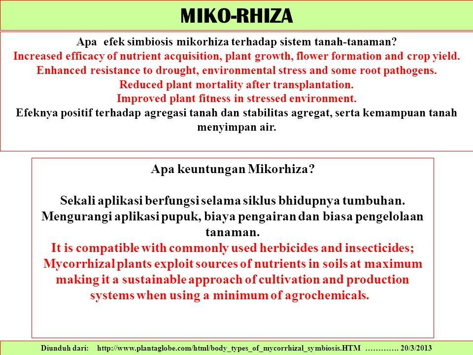 Diunduh dari: http://www.plantaglobe.com/html/body_types_of_mycorrhizal_symbiosis.HTM …………. 20/3/2013 Apa efek simbiosis mikorhiza terhadap sistem tan