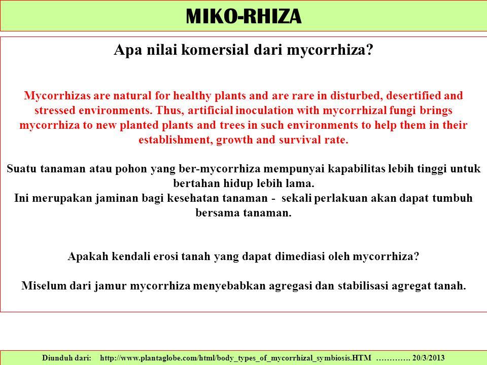 Diunduh dari: http://www.plantaglobe.com/html/body_types_of_mycorrhizal_symbiosis.HTM …………. 20/3/2013 Apa nilai komersial dari mycorrhiza? Mycorrhizas