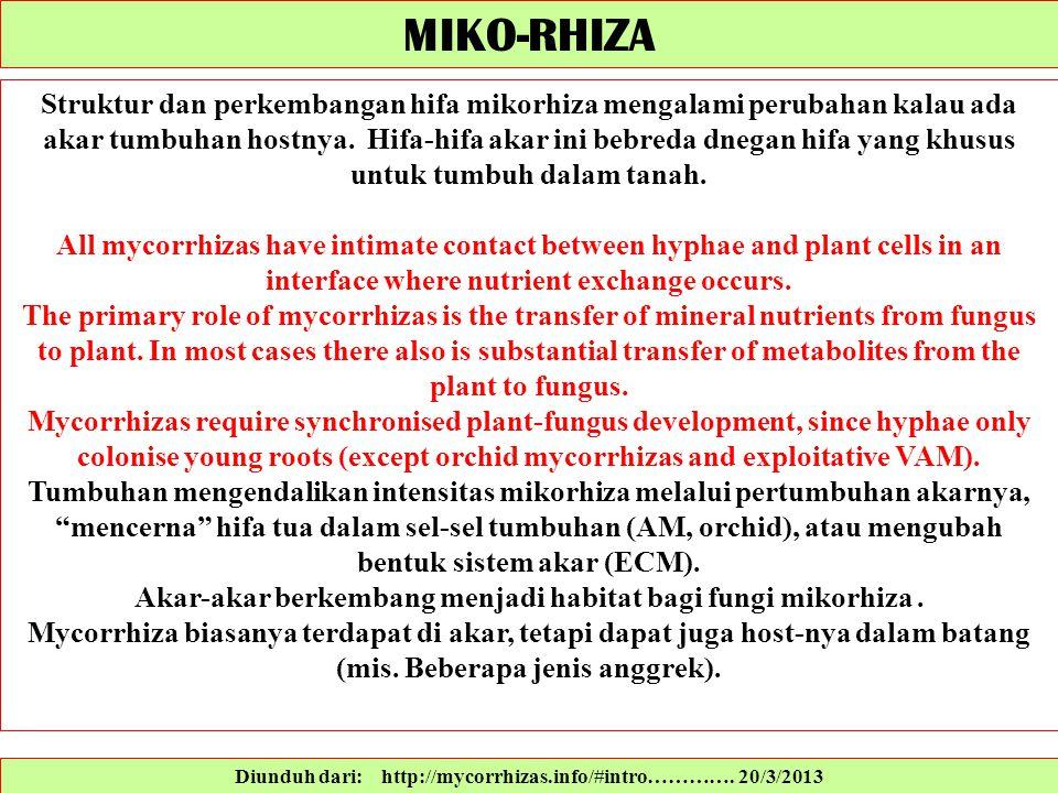 Diunduh dari: http://mycorrhizas.info/#intro…………. 20/3/2013 Struktur dan perkembangan hifa mikorhiza mengalami perubahan kalau ada akar tumbuhan hostn