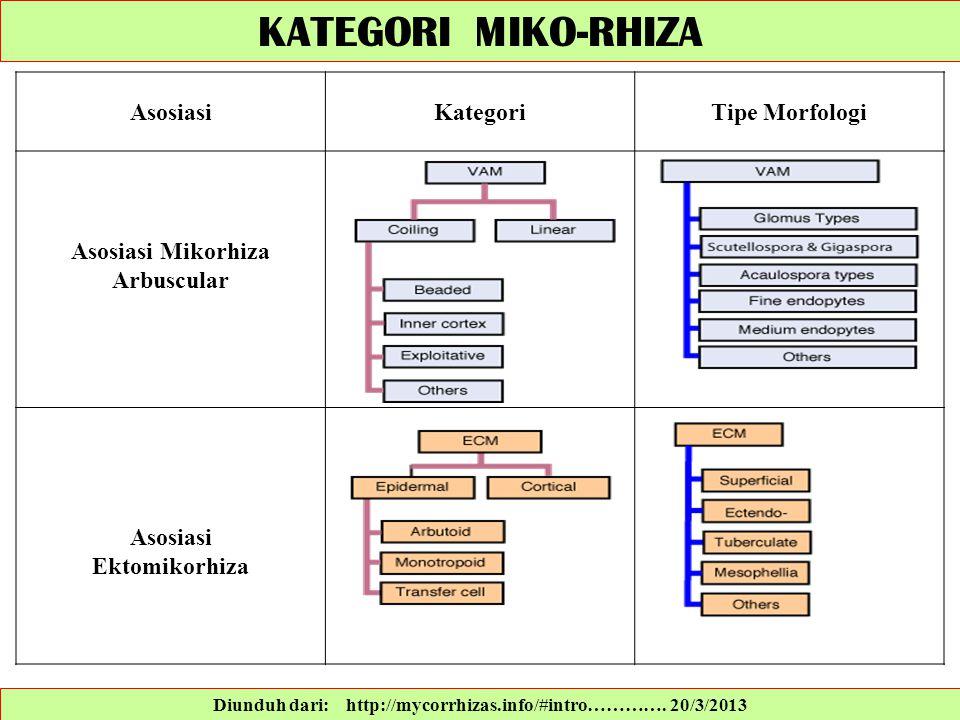 Diunduh dari: http://mycorrhizas.info/#intro…………. 20/3/2013 KATEGORI MIKO-RHIZA AsosiasiKategoriTipe Morfologi Asosiasi Mikorhiza Arbuscular Asosiasi