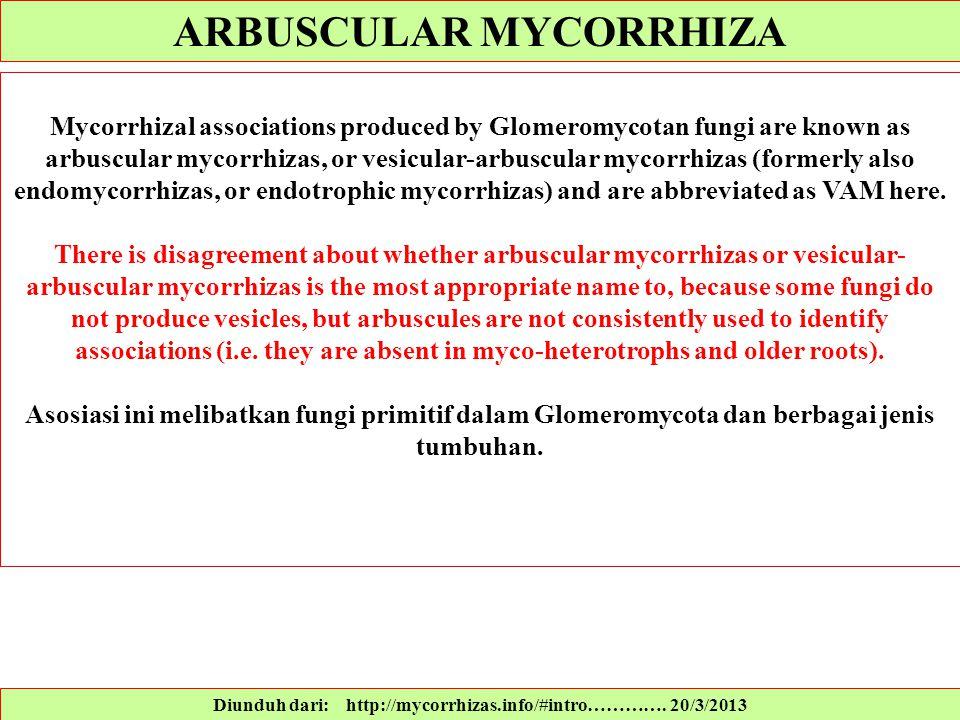 Diunduh dari: http://mycorrhizas.info/#intro…………. 20/3/2013 Mycorrhizal associations produced by Glomeromycotan fungi are known as arbuscular mycorrhi