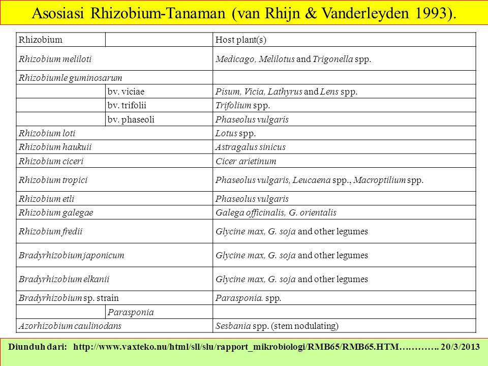 Diunduh dari: http://www.vaxteko.nu/html/sll/slu/rapport_mikrobiologi/RMB65/RMB65.HTM…………. 20/3/2013 Asosiasi Rhizobium-Tanaman (van Rhijn & Vanderley