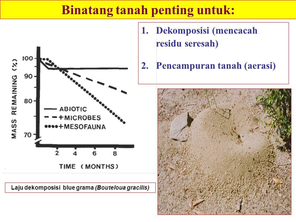 1.Dekomposisi (mencacah residu seresah) 2.Pencampuran tanah (aerasi) Laju dekomposisi blue grama (Bouteloua gracilis) Binatang tanah penting untuk: