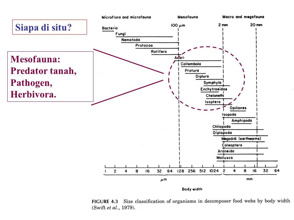 Siapa di situ? Mesofauna: Predator tanah, Pathogen, Herbivora.