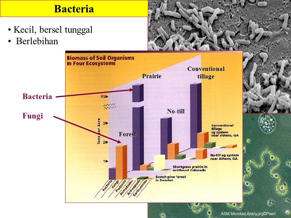 Bacteria Kecil, bersel tunggal Berlebihan Bacteria Fungi Conventionaltillage No-till Prairie Forest