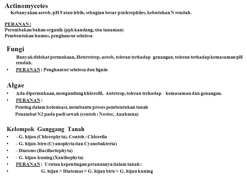 Actinomycetes Kebanyakan aerob, pH 5 atau lebih, sebagian besar psichrophiles, kebutuhan N rendah. PERANAN : Perombakan bahan organik (ppk kandang, si
