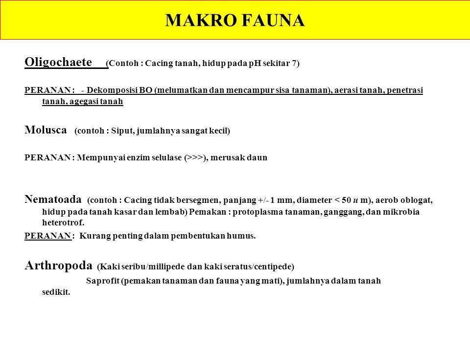 MAKRO FAUNA Oligochaete (Contoh : Cacing tanah, hidup pada pH sekitar 7) PERANAN : - Dekomposisi BO (melumatkan dan mencampur sisa tanaman), aerasi ta