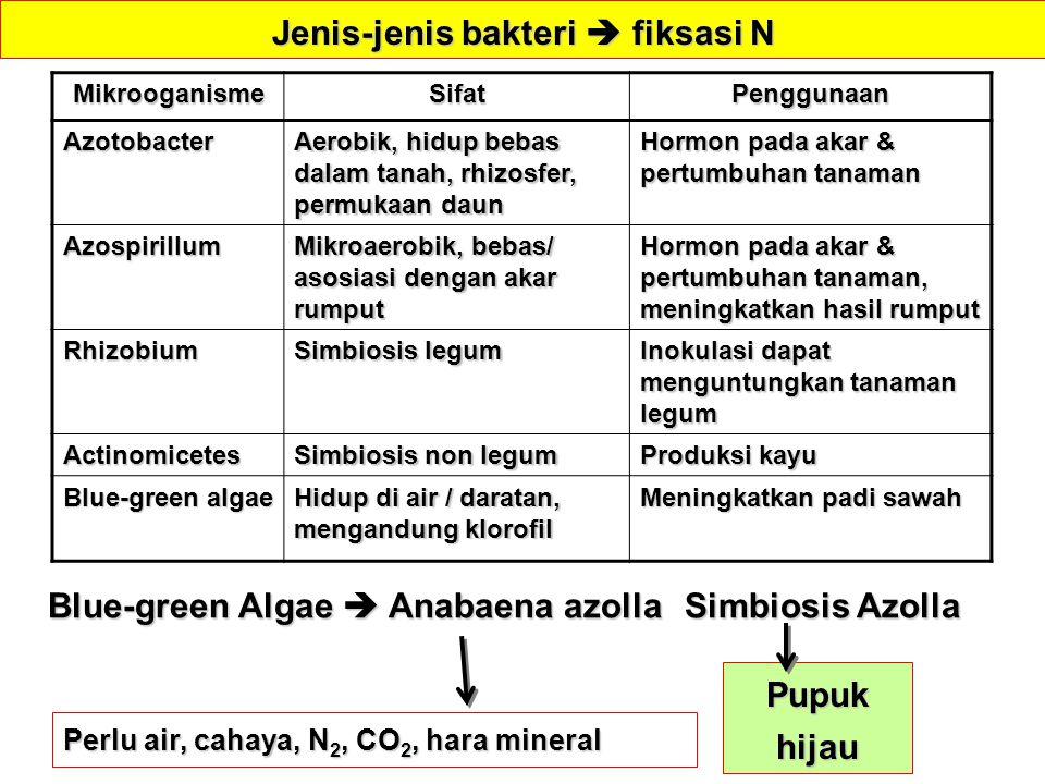MikrooganismeSifatPenggunaanAzotobacter Aerobik, hidup bebas dalam tanah, rhizosfer, permukaan daun Hormon pada akar & pertumbuhan tanaman Azospirillu