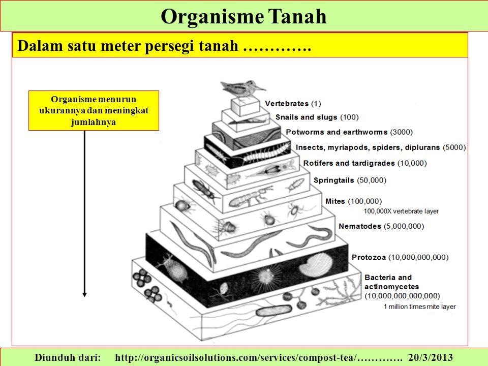 Organisme Tanah Diunduh dari: http://organicsoilsolutions.com/services/compost-tea/…………. 20/3/2013 Dalam satu meter persegi tanah …………. Organisme menu