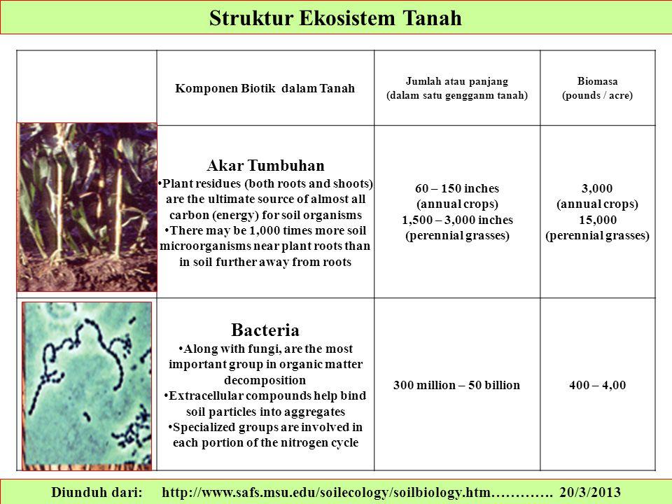 Struktur Ekosistem Tanah Diunduh dari: http://www.safs.msu.edu/soilecology/soilbiology.htm…………. 20/3/2013 Komponen Biotik dalam Tanah Jumlah atau panj