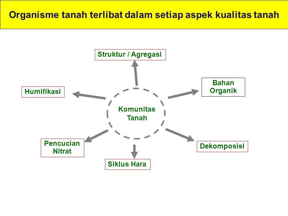 Diversitas dalam tanah sangat penting untuk siklus nitrogen.