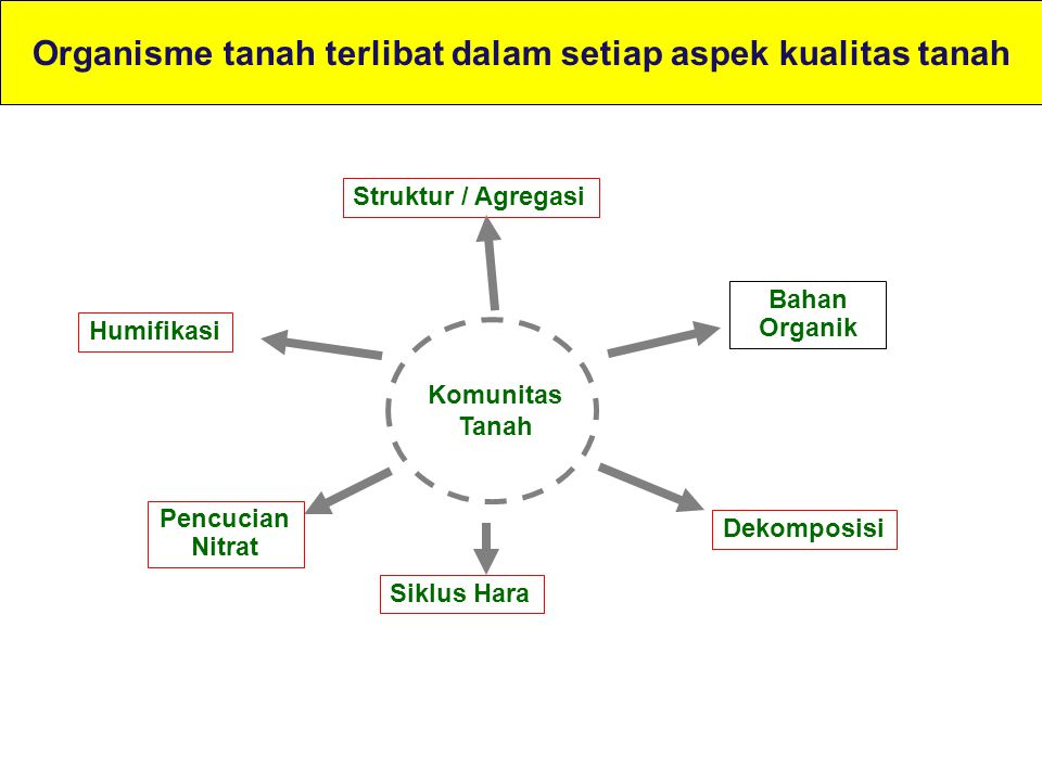 Organisme tanah terlibat dalam setiap aspek kualitas tanah Bahan Organik Pencucian Nitrat Komunitas Tanah Siklus Hara Struktur / Agregasi Humifikasi D