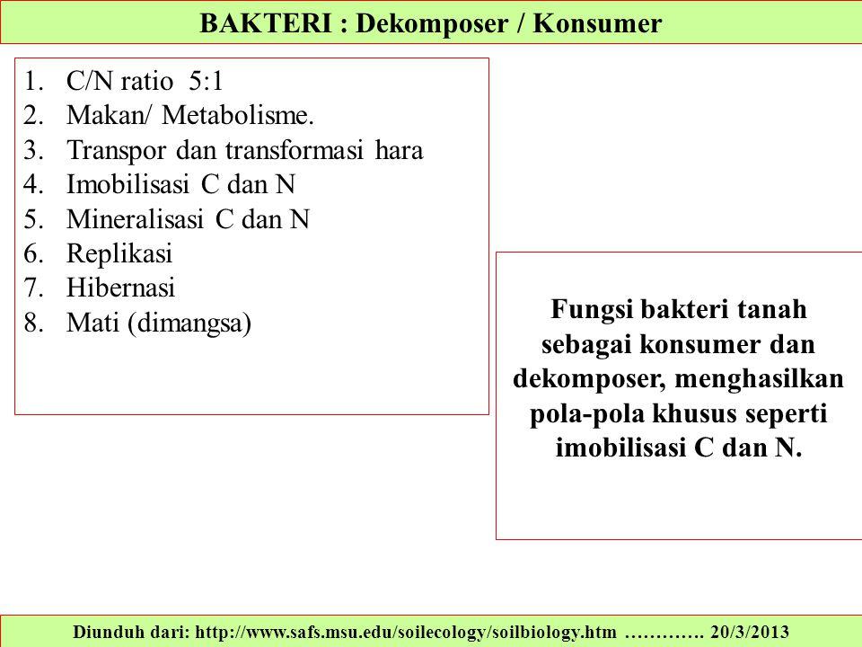 BAKTERI : Dekomposer / Konsumer Diunduh dari: http://www.safs.msu.edu/soilecology/soilbiology.htm …………. 20/3/2013 1.C/N ratio 5:1 2.Makan/ Metabolisme