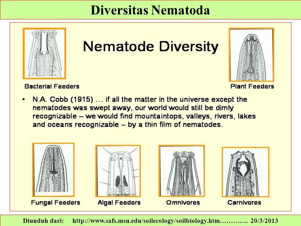 Diversitas Nematoda Diunduh dari: http://www.safs.msu.edu/soilecology/soilbiology.htm…………. 20/3/2013