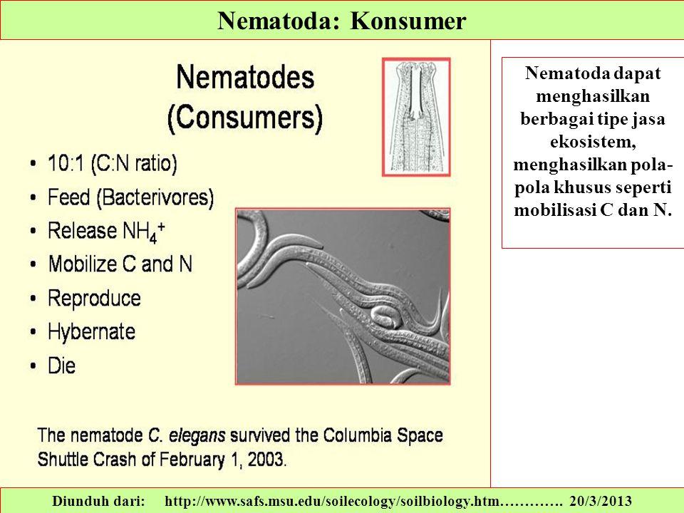 Nematoda: Konsumer Nematoda dapat menghasilkan berbagai tipe jasa ekosistem, menghasilkan pola- pola khusus seperti mobilisasi C dan N. Diunduh dari:
