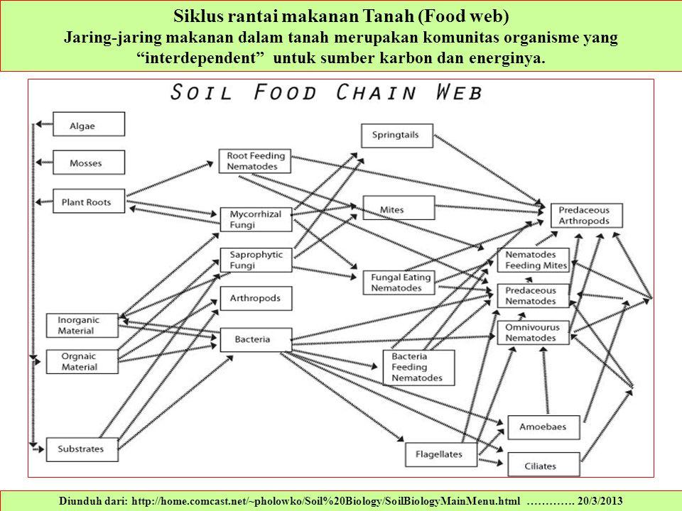"""Siklus rantai makanan Tanah (Food web) Jaring-jaring makanan dalam tanah merupakan komunitas organisme yang """"interdependent"""" untuk sumber karbon dan e"""
