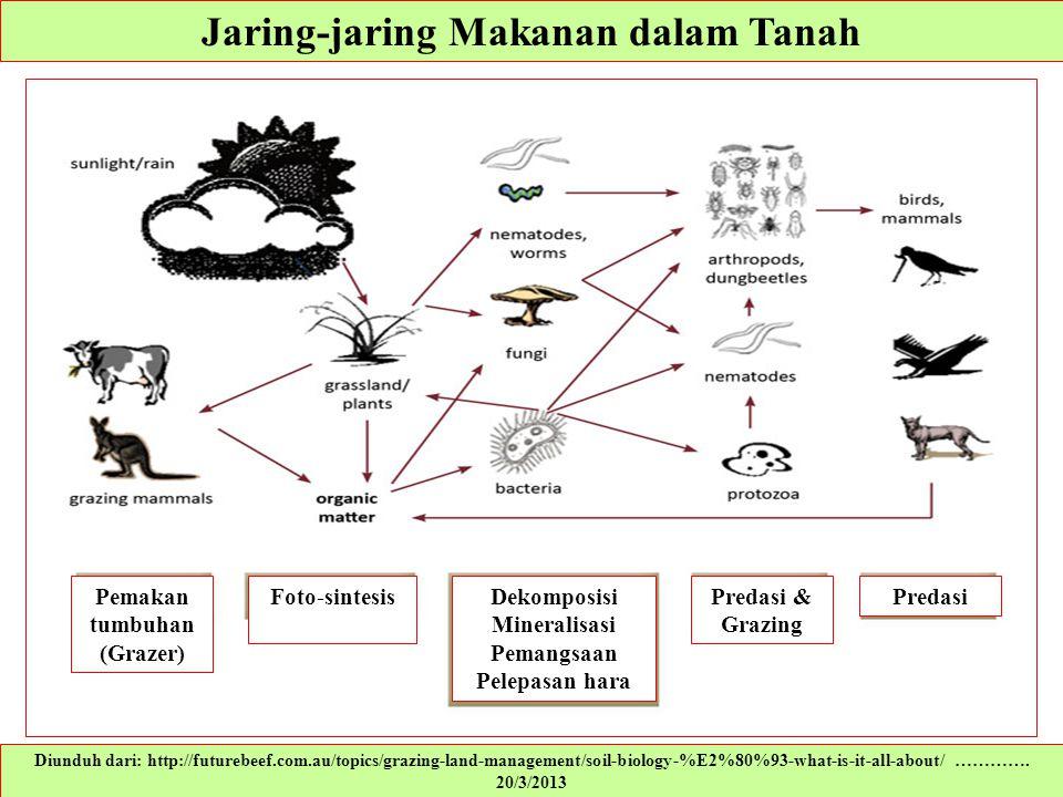 Jaring-jaring Makanan dalam Tanah Diunduh dari: http://futurebeef.com.au/topics/grazing-land-management/soil-biology-%E2%80%93-what-is-it-all-about/ …