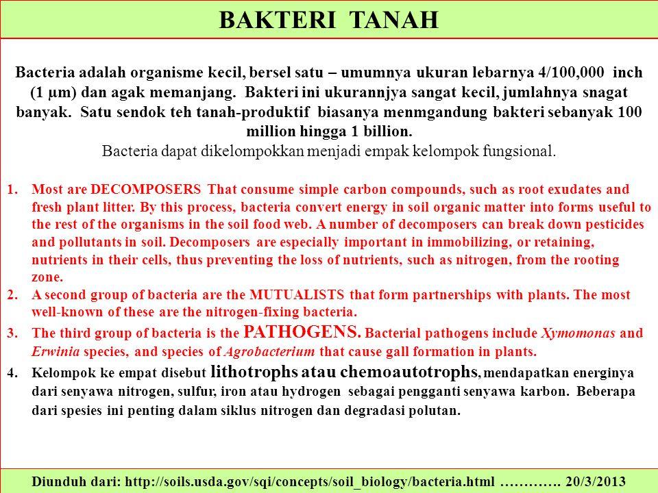 BAKTERI TANAH Diunduh dari: http://soils.usda.gov/sqi/concepts/soil_biology/bacteria.html …………. 20/3/2013 Bacteria adalah organisme kecil, bersel satu