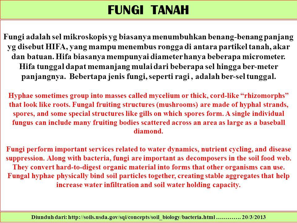 FUNGI TANAH Fungi adalah sel mikroskopis yg biasanya menumbuhkan benang-benang panjang yg disebut HIFA, yang mampu menembus rongga di antara partikel