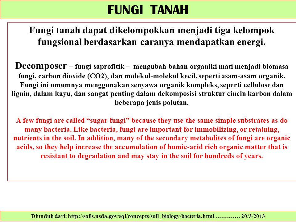 FUNGI TANAH Fungi tanah dapat dikelompokkan menjadi tiga kelompok fungsional berdasarkan caranya mendapatkan energi. Decomposer – fungi saprofitik – m