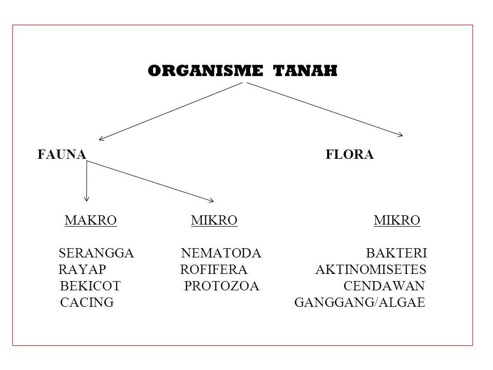 ORGANISME TANAH FAUNA FLORA MAKRO MIKRO MIKRO SERANGGA NEMATODA BAKTERI RAYAP ROFIFERA AKTINOMISETES BEKICOT PROTOZOA CENDAWAN CACING GANGGANG/ALGAE