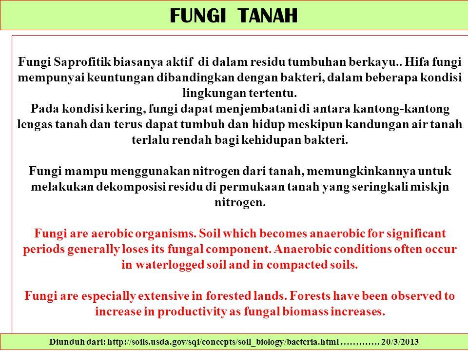 FUNGI TANAH Fungi Saprofitik biasanya aktif di dalam residu tumbuhan berkayu.. Hifa fungi mempunyai keuntungan dibandingkan dengan bakteri, dalam bebe