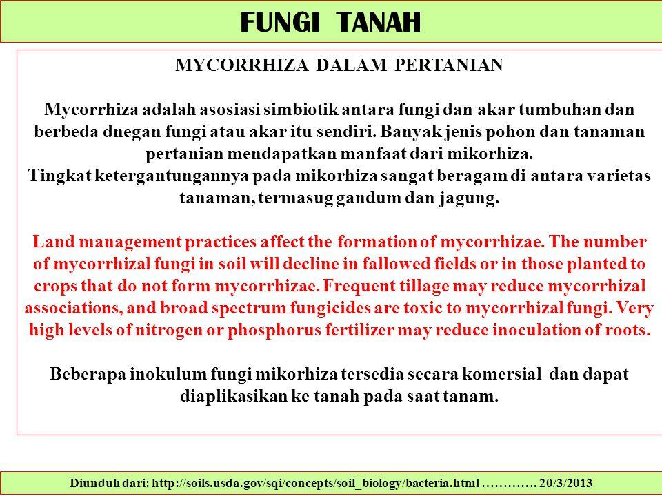 FUNGI TANAH MYCORRHIZA DALAM PERTANIAN Mycorrhiza adalah asosiasi simbiotik antara fungi dan akar tumbuhan dan berbeda dnegan fungi atau akar itu send