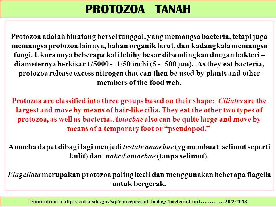 PROTOZOA TANAH Protozoa adalah binatang bersel tunggal, yang memangsa bacteria, tetapi juga memangsa protozoa lainnya, bahan organik larut, dan kadang