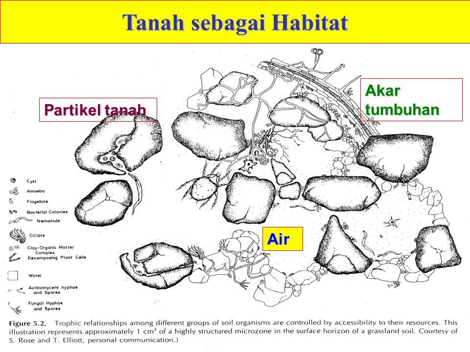 Air Partikel tanah Akar tumbuhan Tanah sebagai Habitat