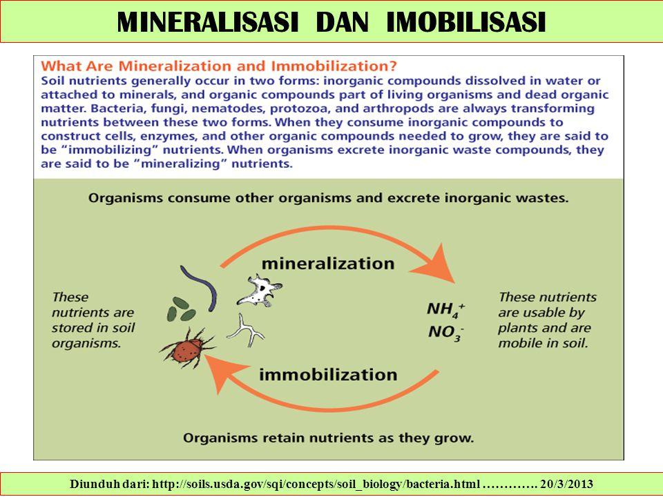 MINERALISASI DAN IMOBILISASI Diunduh dari: http://soils.usda.gov/sqi/concepts/soil_biology/bacteria.html …………. 20/3/2013