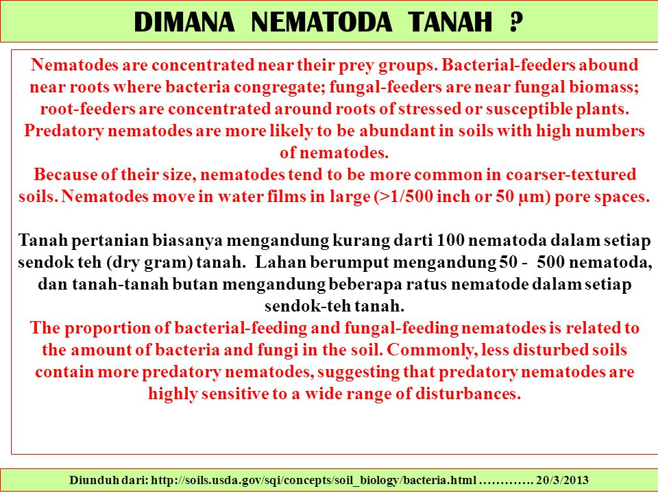 DIMANA NEMATODA TANAH ? Nematodes are concentrated near their prey groups. Bacterial-feeders abound near roots where bacteria congregate; fungal-feede