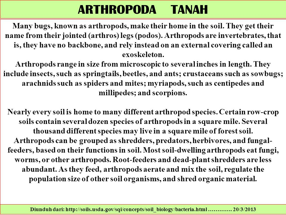 ARTHROPODA TANAH Many bugs, known as arthropods, make their home in the soil. They get their name from their jointed (arthros) legs (podos). Arthropod