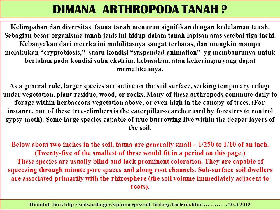Kelimpahan dan diversitas fauna tanah menurun signifikan dengan kedalaman tanah. Sebagian besar organisme tanah jenis ini hidup dalam tanah lapisan at