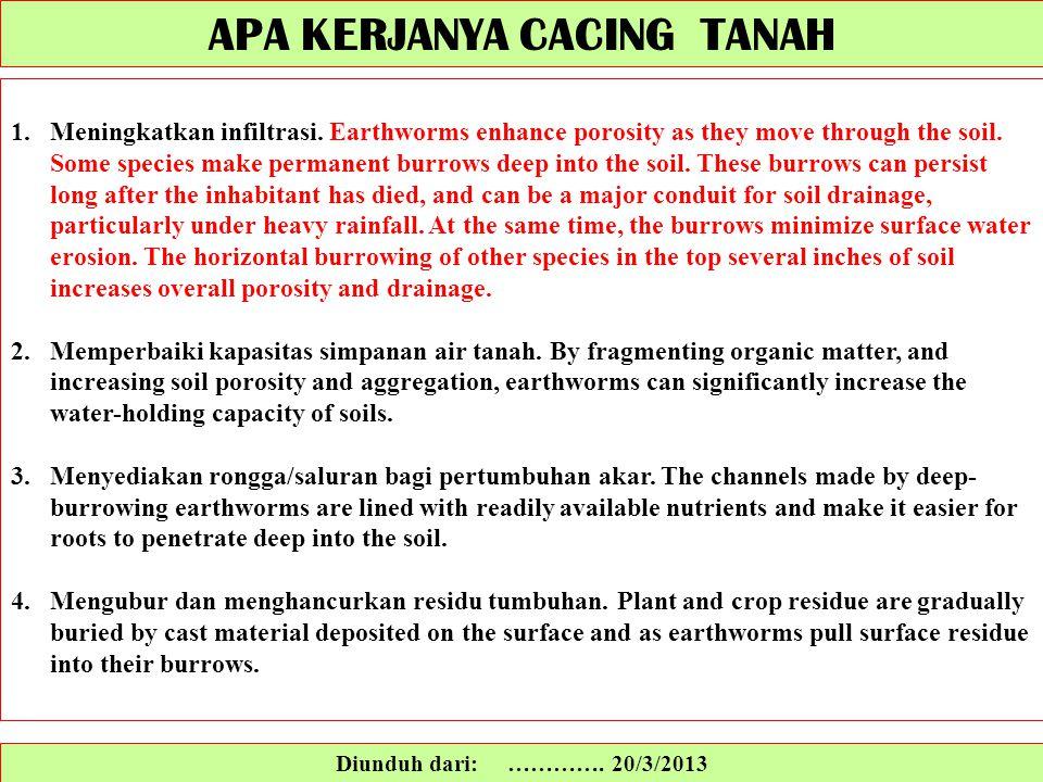 Diunduh dari: …………. 20/3/2013 1.Meningkatkan infiltrasi. Earthworms enhance porosity as they move through the soil. Some species make permanent burrow